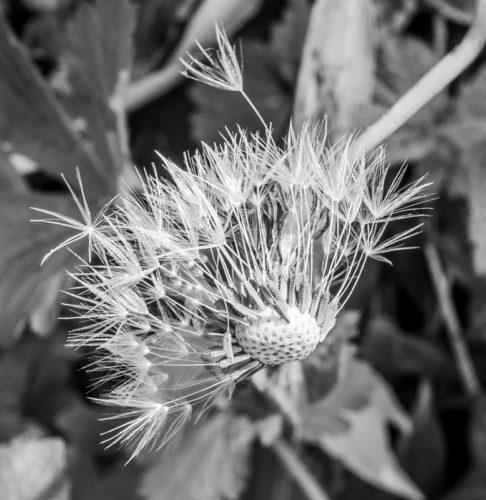 EM100080- flickr--144--141